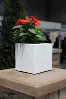 купить Бетонная ваза Куб малый 180х180х180 (роспись)